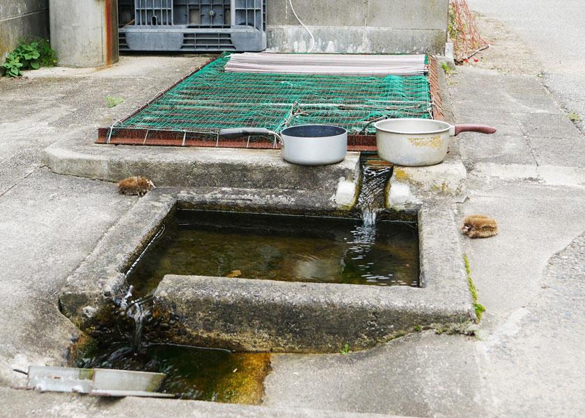 柏尾の水場